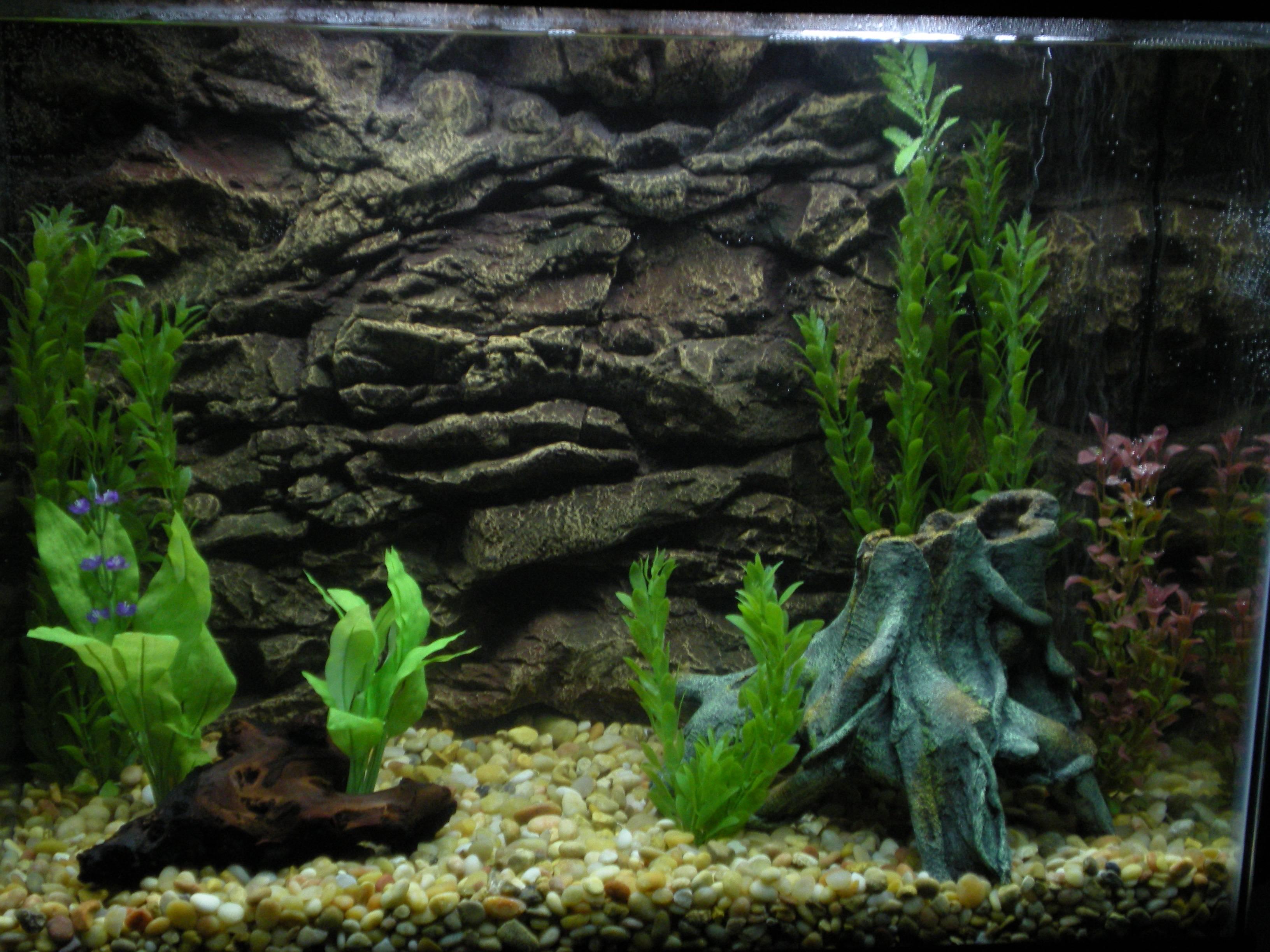hd aquarium backgrounds verat