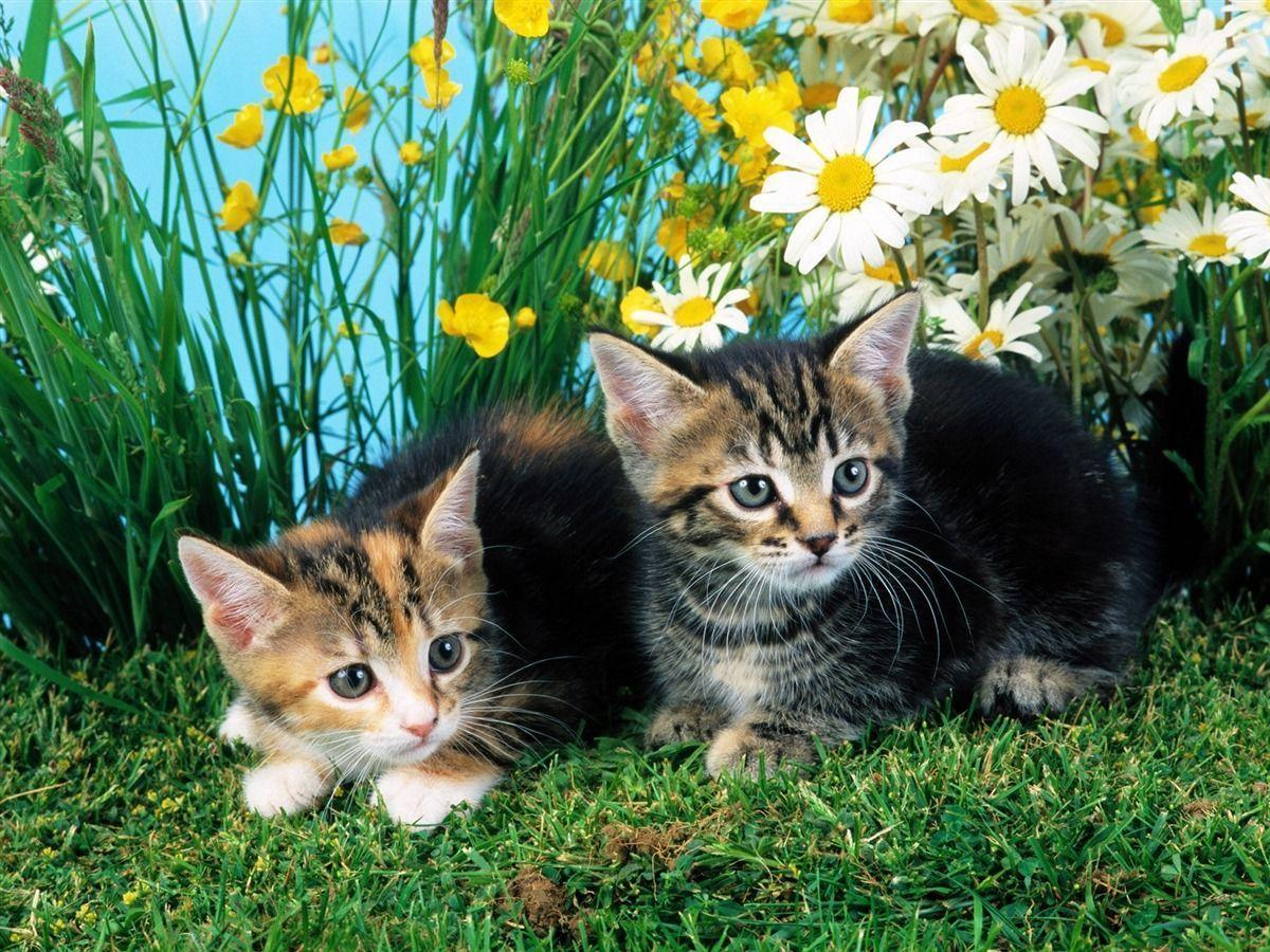 Kitty Cat Wallpapers  Wallpaper Cave