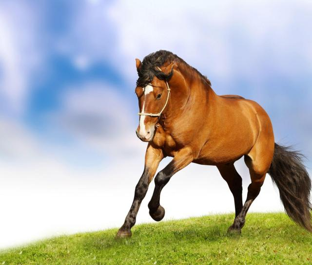 Horse Wallpaper For Home Hd Wallpaperswallforu Com