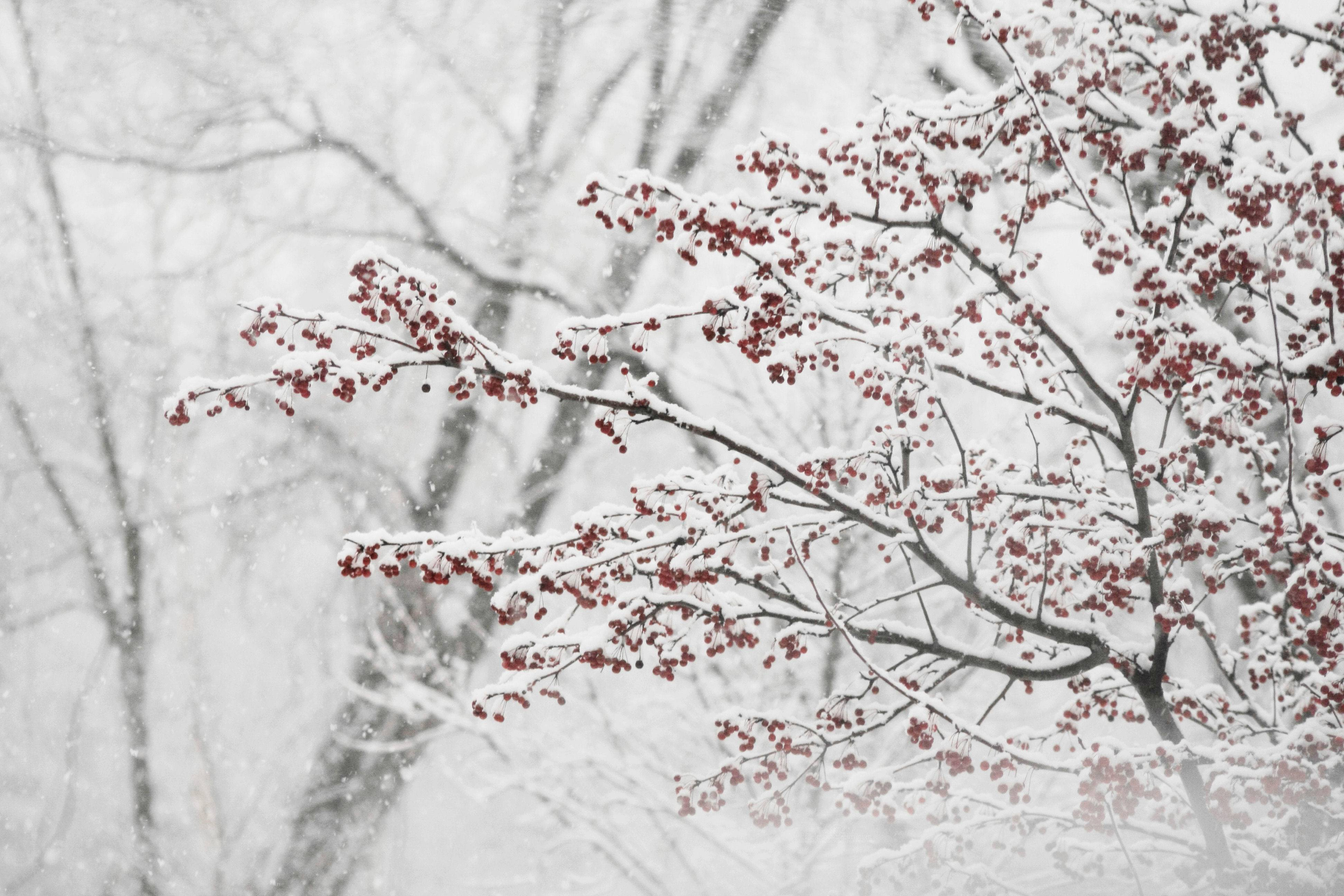 Snow Storm Wallpapers Wallpaper Cave