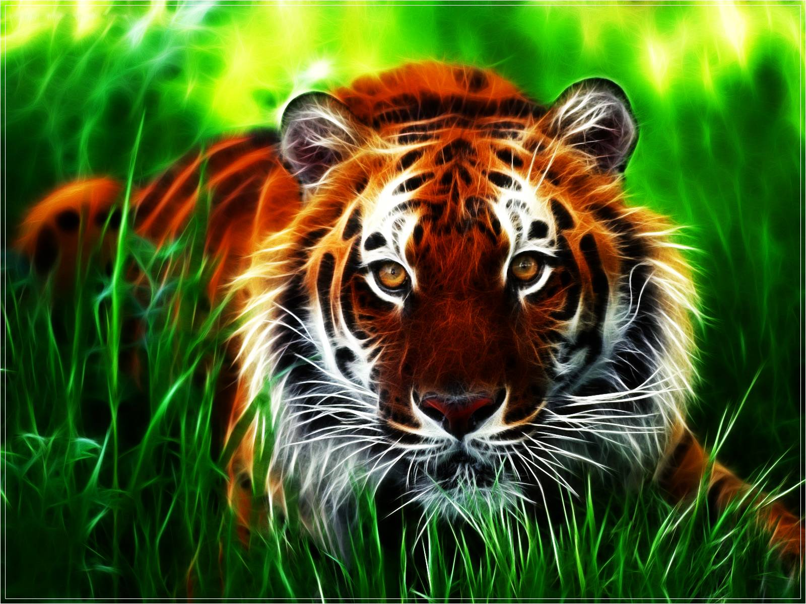 tiger hd wallpapers wallpaper