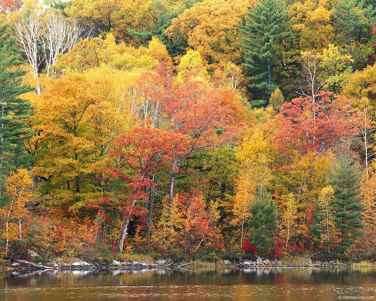 Fall Colors Wallpaper New England Fall Foliage Wallpapers For Desktop Wallpaper Cave