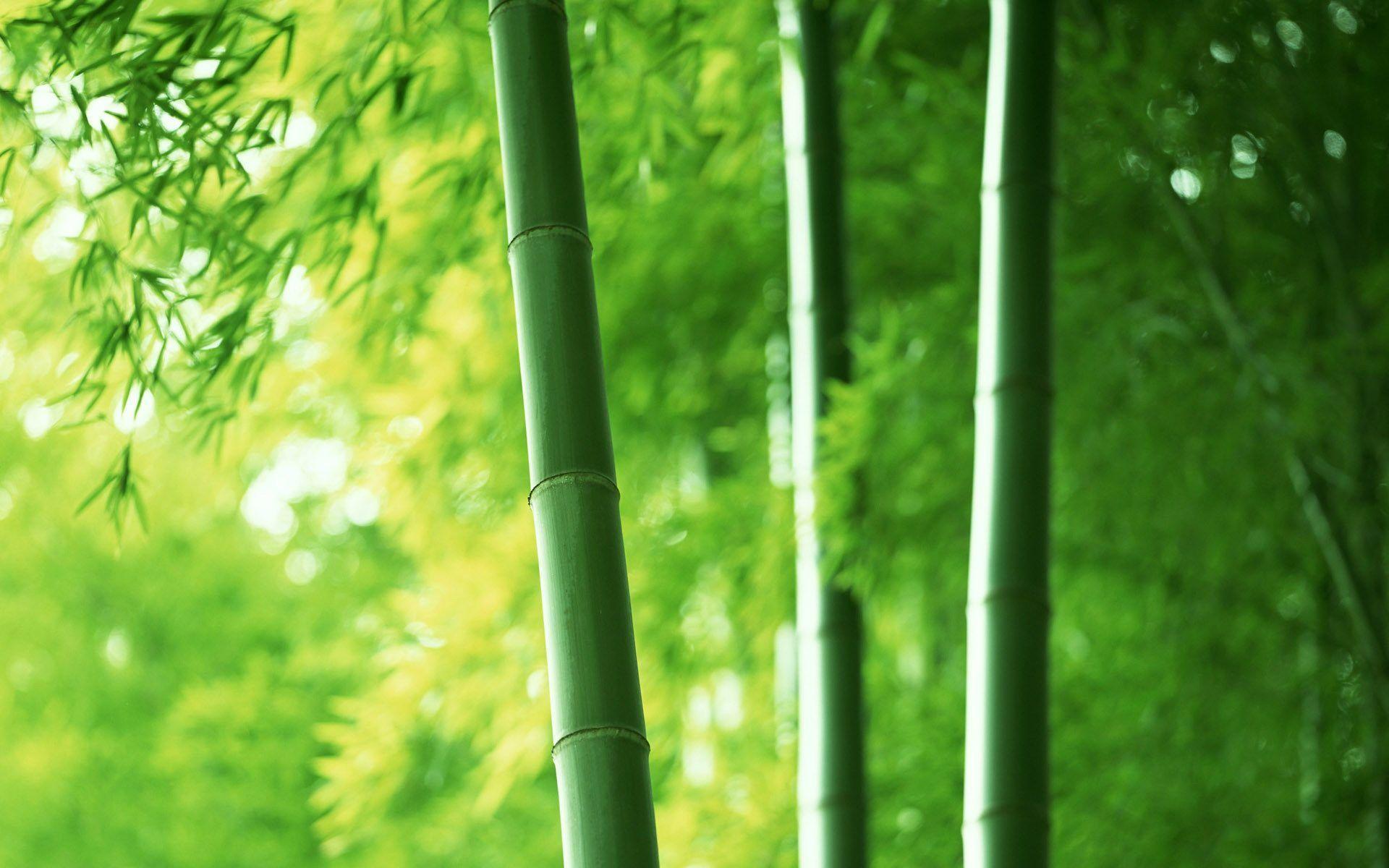 green bamboo wallpapers wallpaper