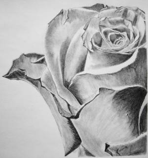 pencil wallpapers rose drawings easy cave