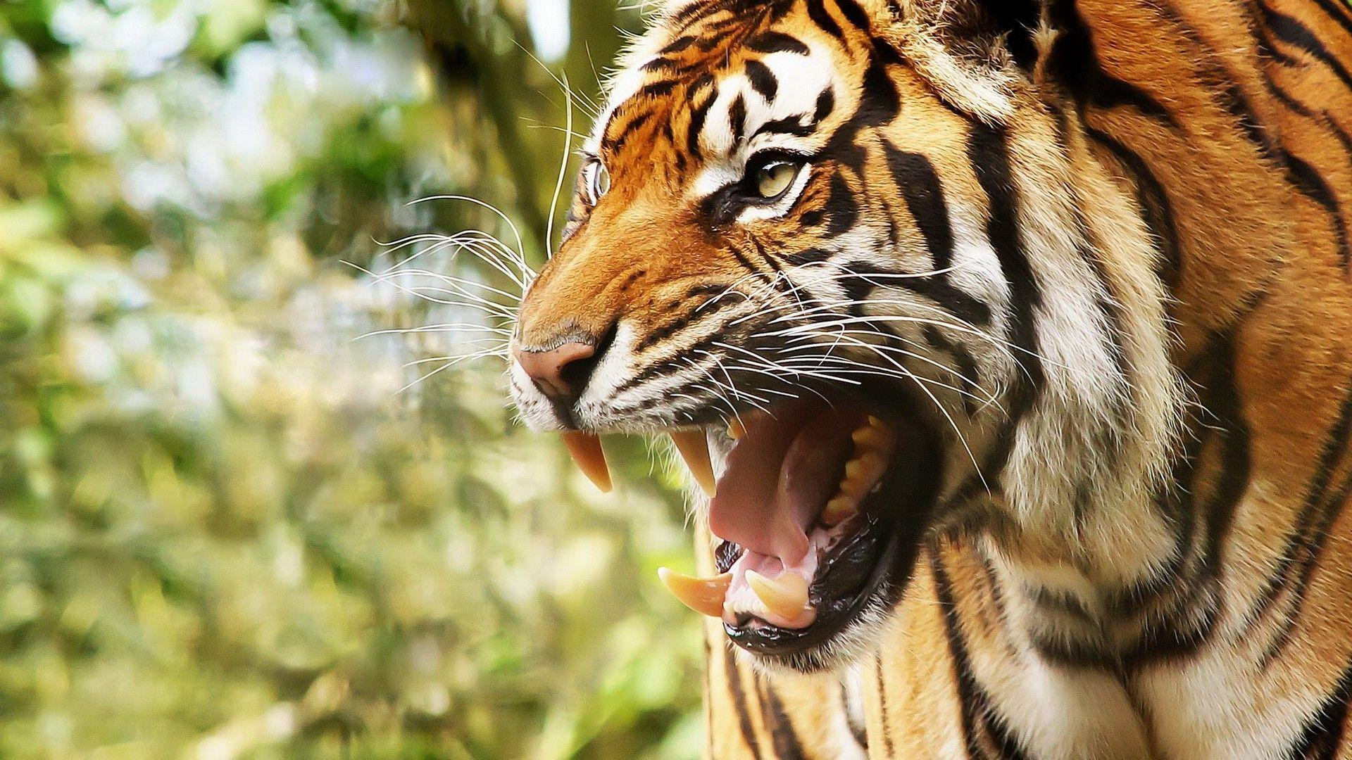 animal backgrounds pictures wallpaper