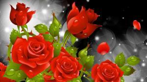 flower rose wallpapers desktop nature