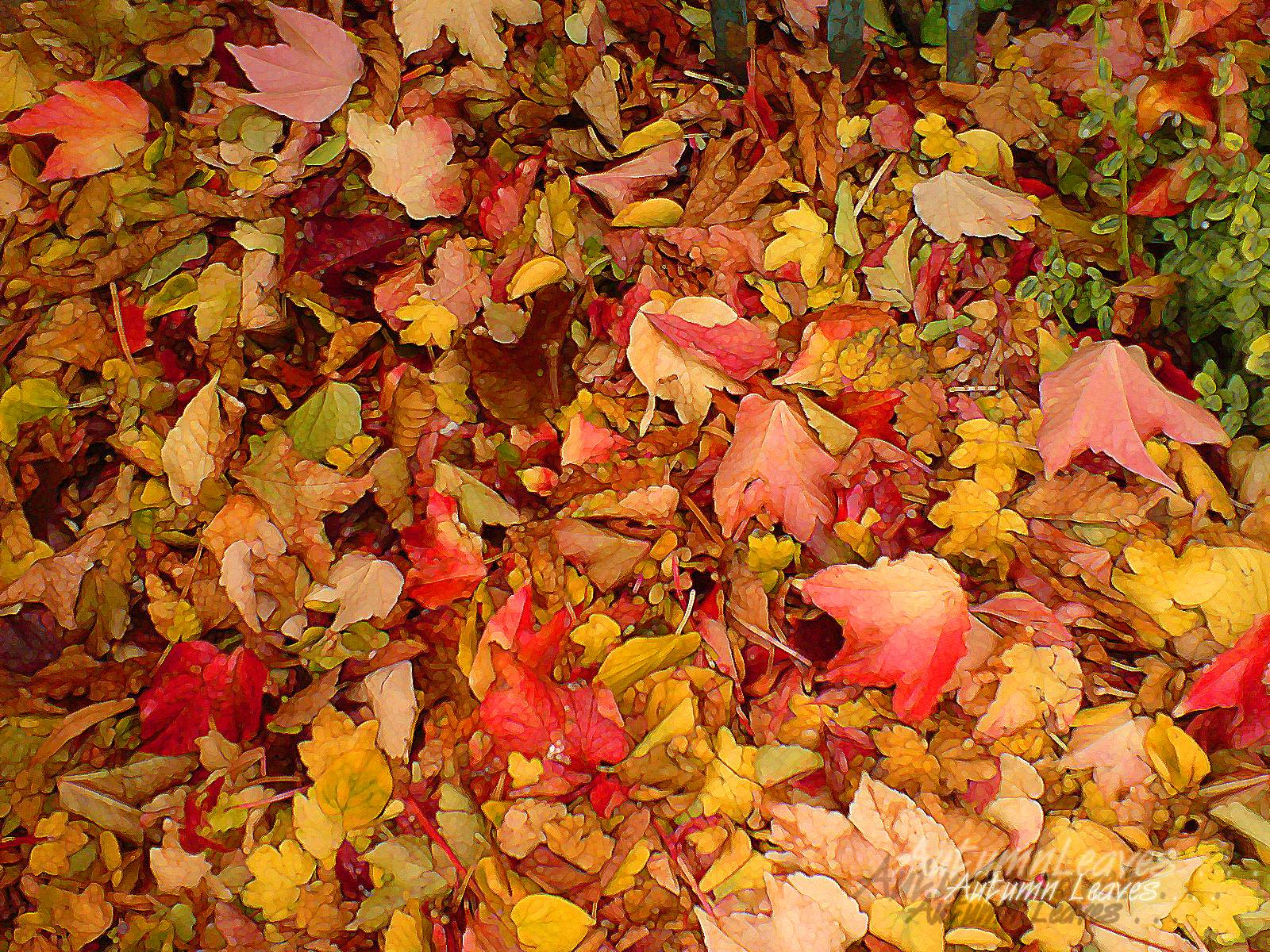Maple Leaf Wallpaper For Fall Season Fall Leaves Wallpapers Free Wallpaper Cave