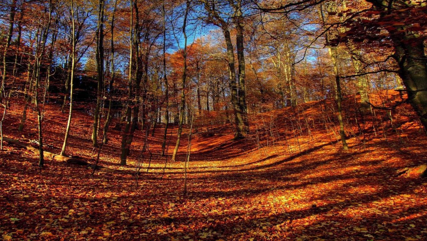 Laptop Wallpapers Fall Fall Scenery Backgrounds Wallpaper Cave