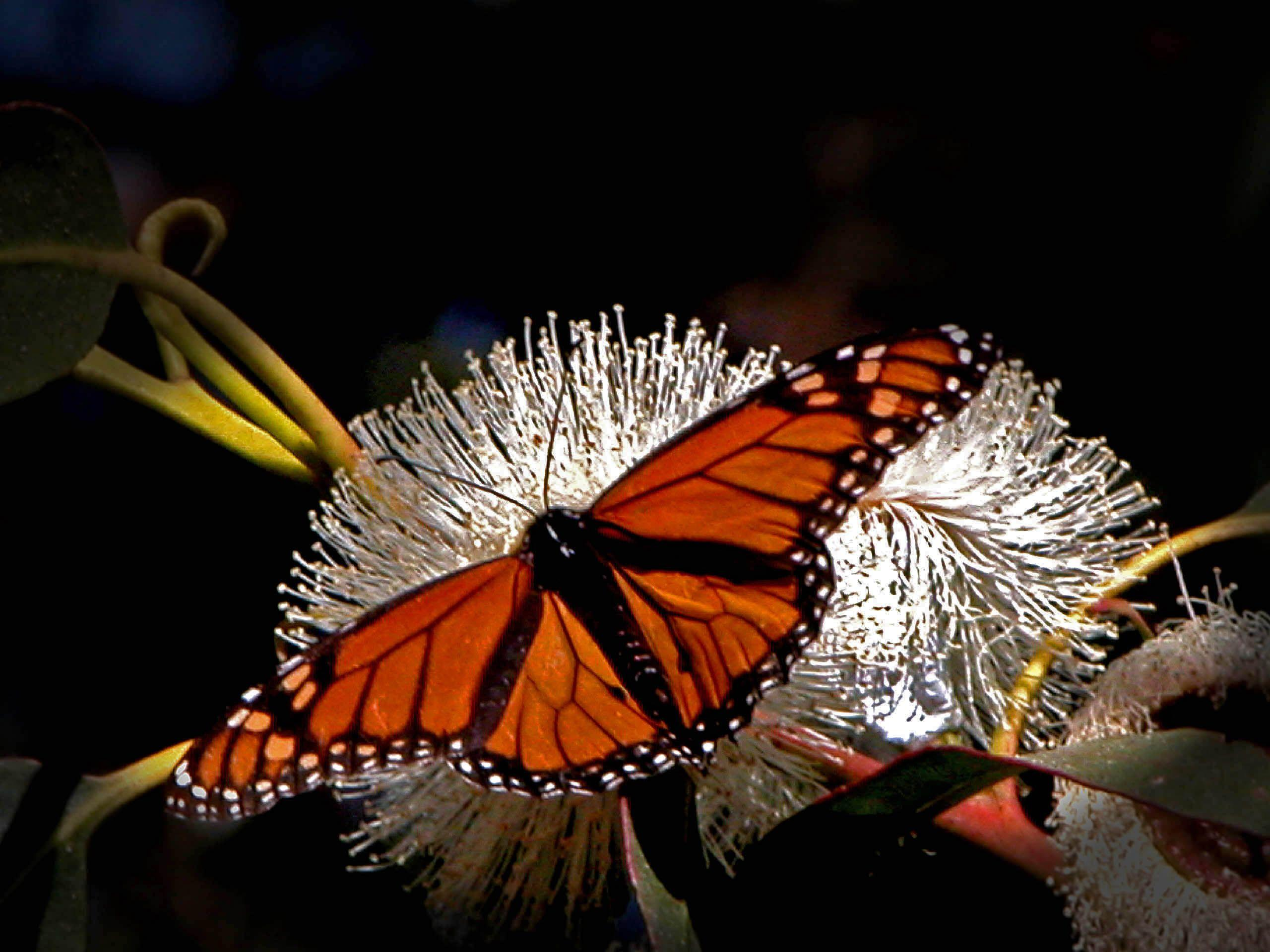 Butterfly Sitting Flower