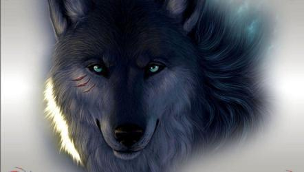 wallpapers wolf hd dark cool anime pack desktop horse alpha rp wallpapersafari backgrounds witnessed regularly male located person cave animal
