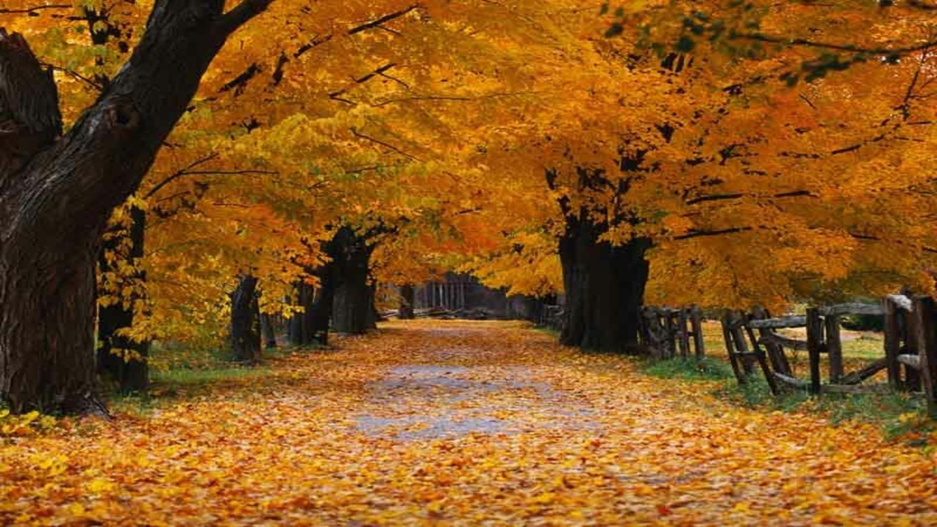 Fall Free Wallpaper Cave Free Fall Wallpaper Backgrounds Wallpaper Cave