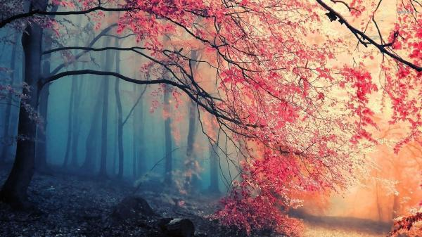 Beautiful Forest Wallpapers - Wallpaper Cave