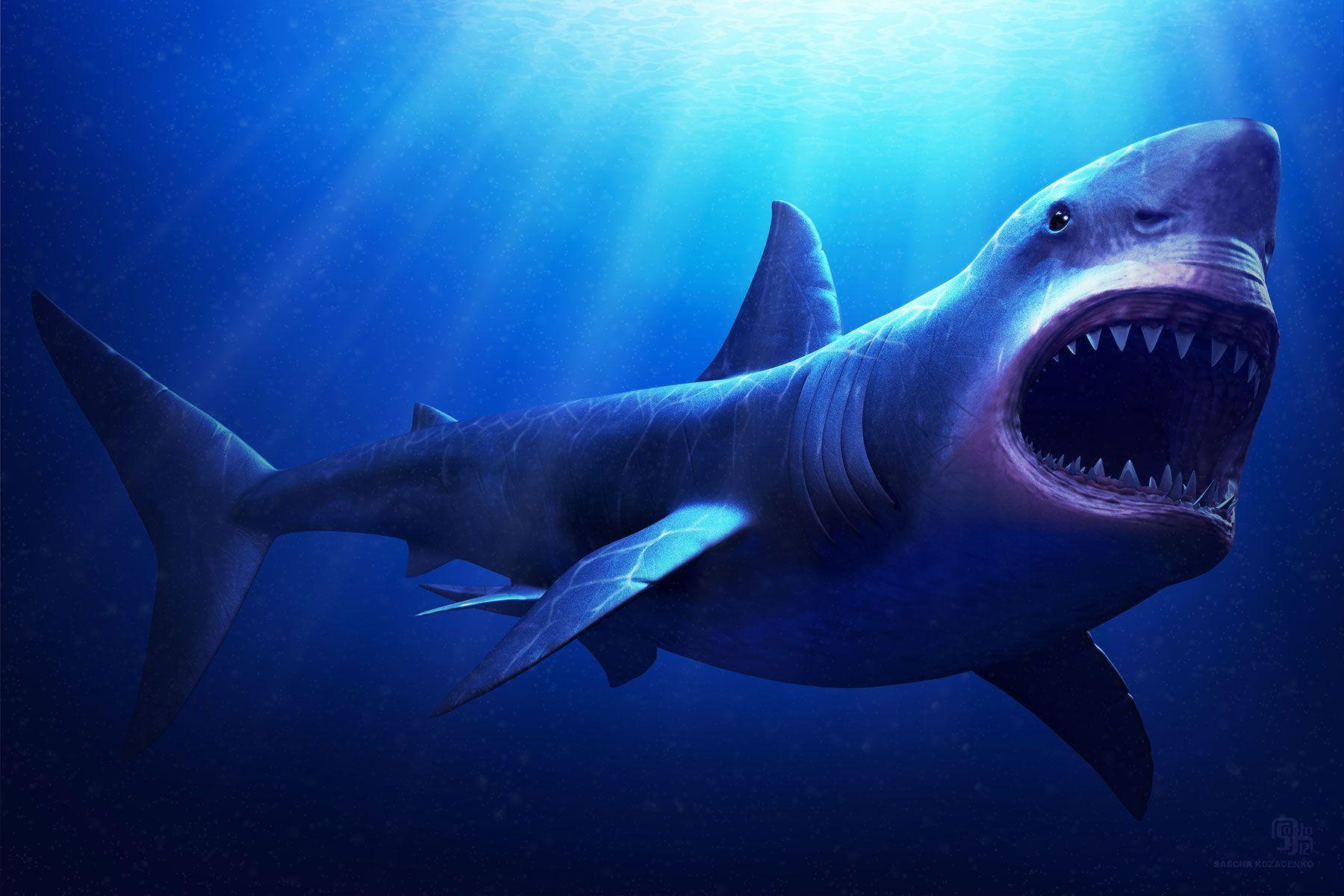 megalodon wallpapers - wallpaper cave