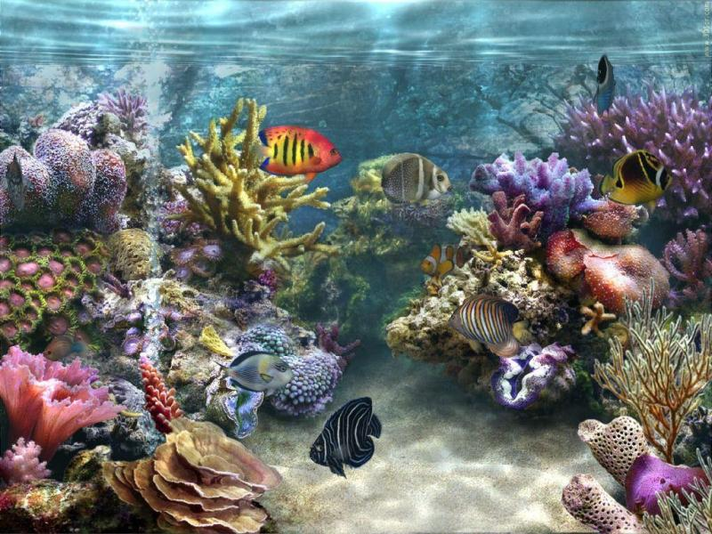 Live Fish Aquarium Wallpaper Live Fish Aquarium Wallpaper Luxury