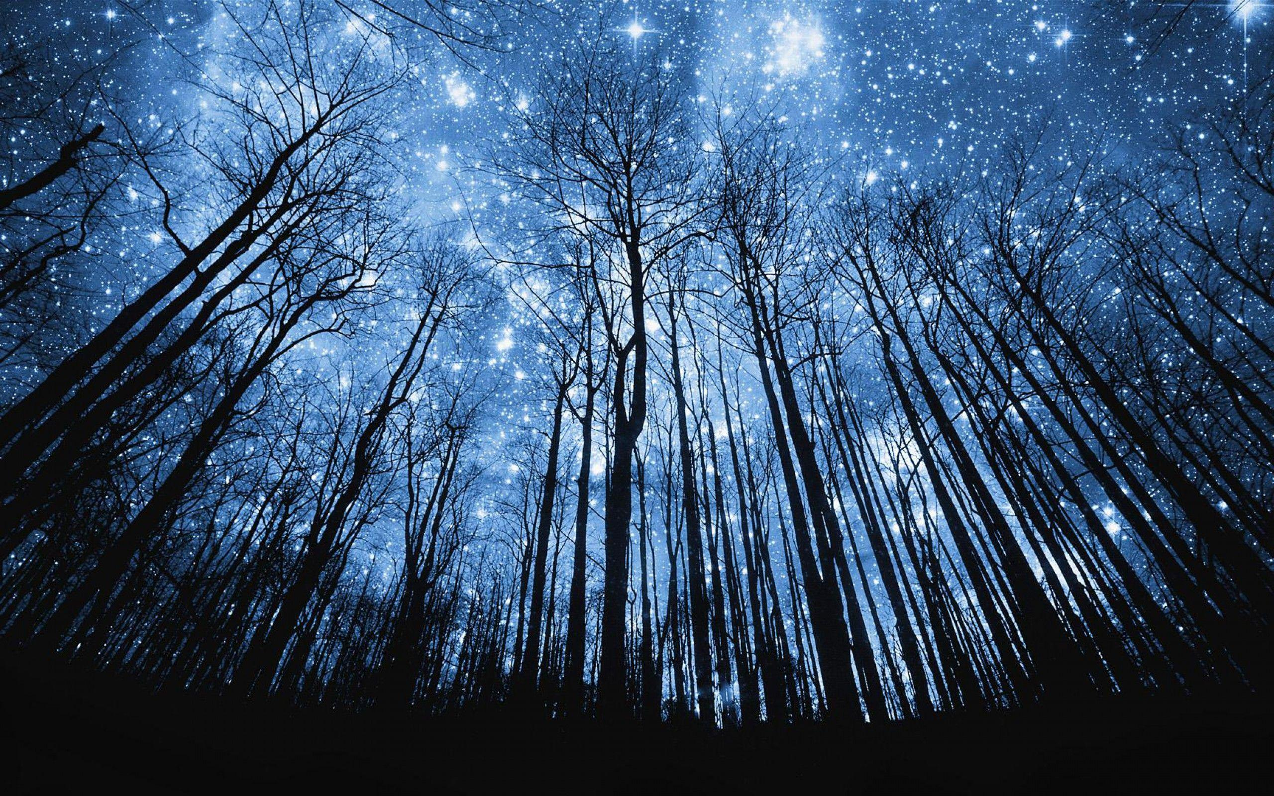 night forest wallpapers wallpaper