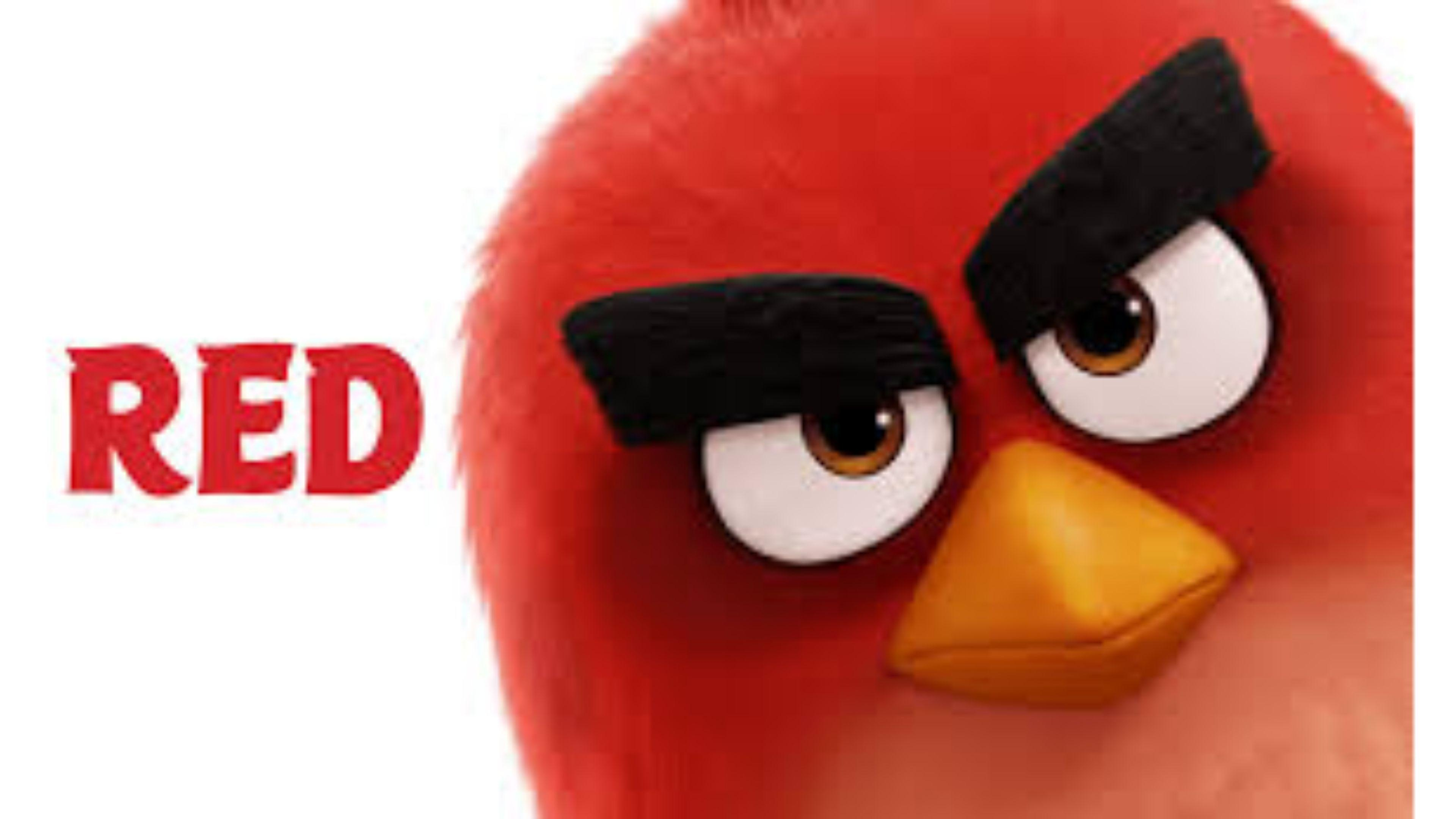angry birds movie red wallpapers