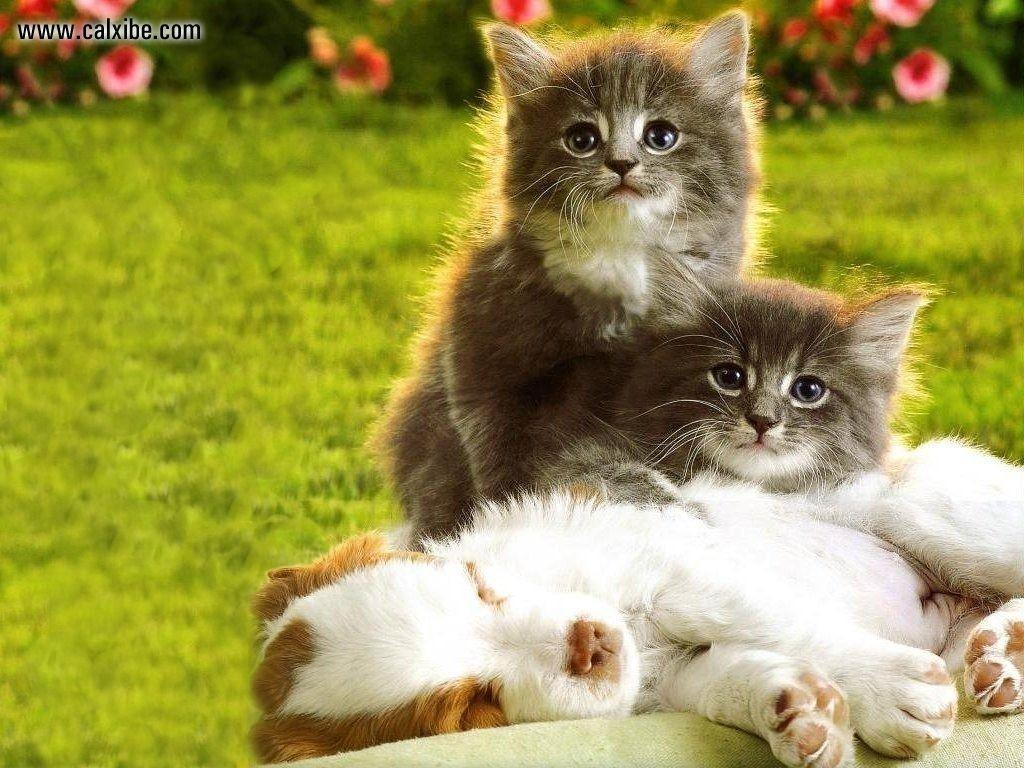 Kittens And Puppies Wallpapers Wallpaper Cave