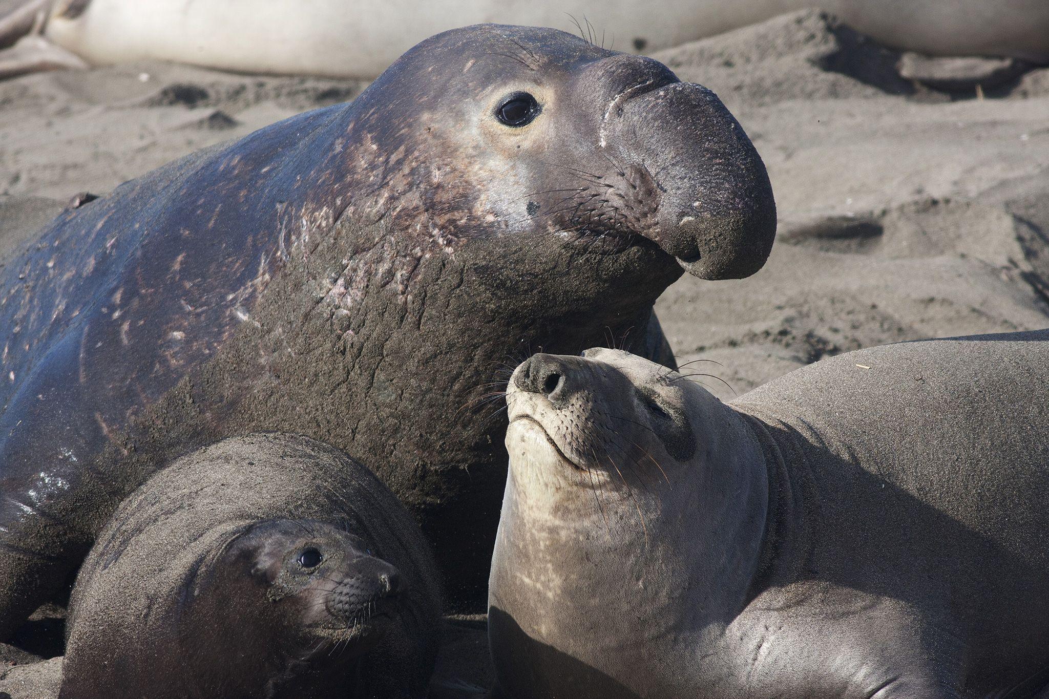 Cute Baby Seals Wallpapers Seals Animal Wallpapers Wallpaper Cave