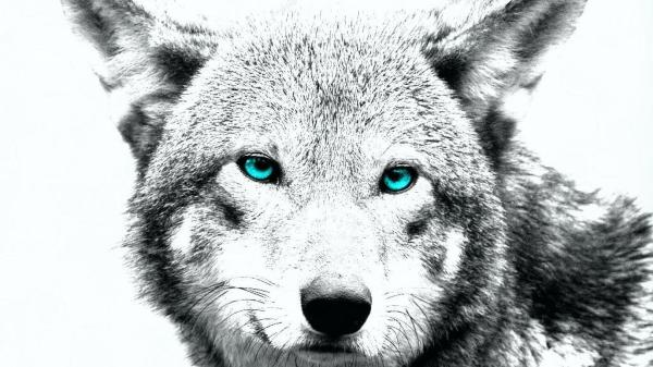Wolves Art Desktop Backgrounds