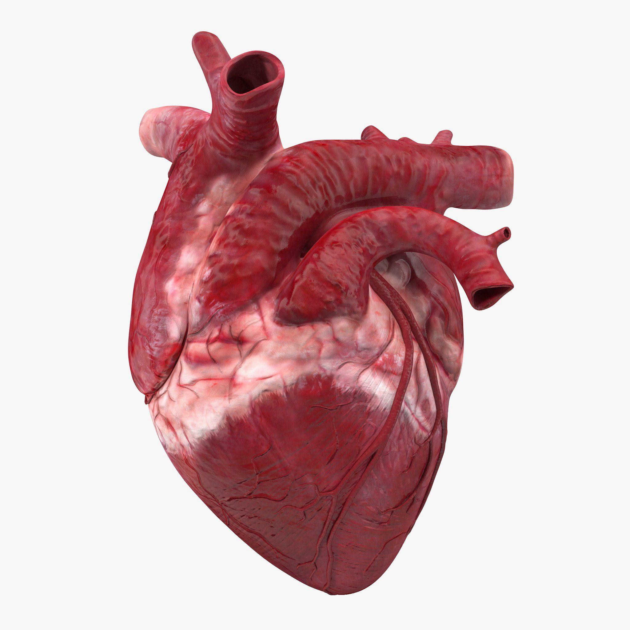 realistic heart diagram car led strip wiring human wallpapers wallpaper cave real images of 25