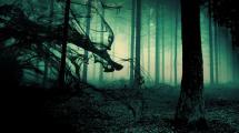 Forbidden Forest Wallpapers - Wallpaper Cave