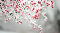 Permalink to Winter Flower Wallpaper Backgrounds