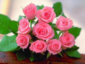 roses rose wallpapers desktop pink flower pc backgrounds wallpaperaccess wallpapercave picserio resolution greepx cave