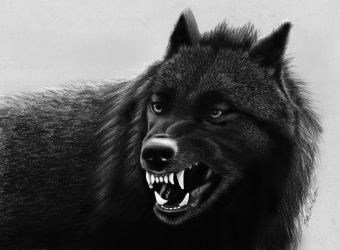 wolves wallpapers wolf hd cave