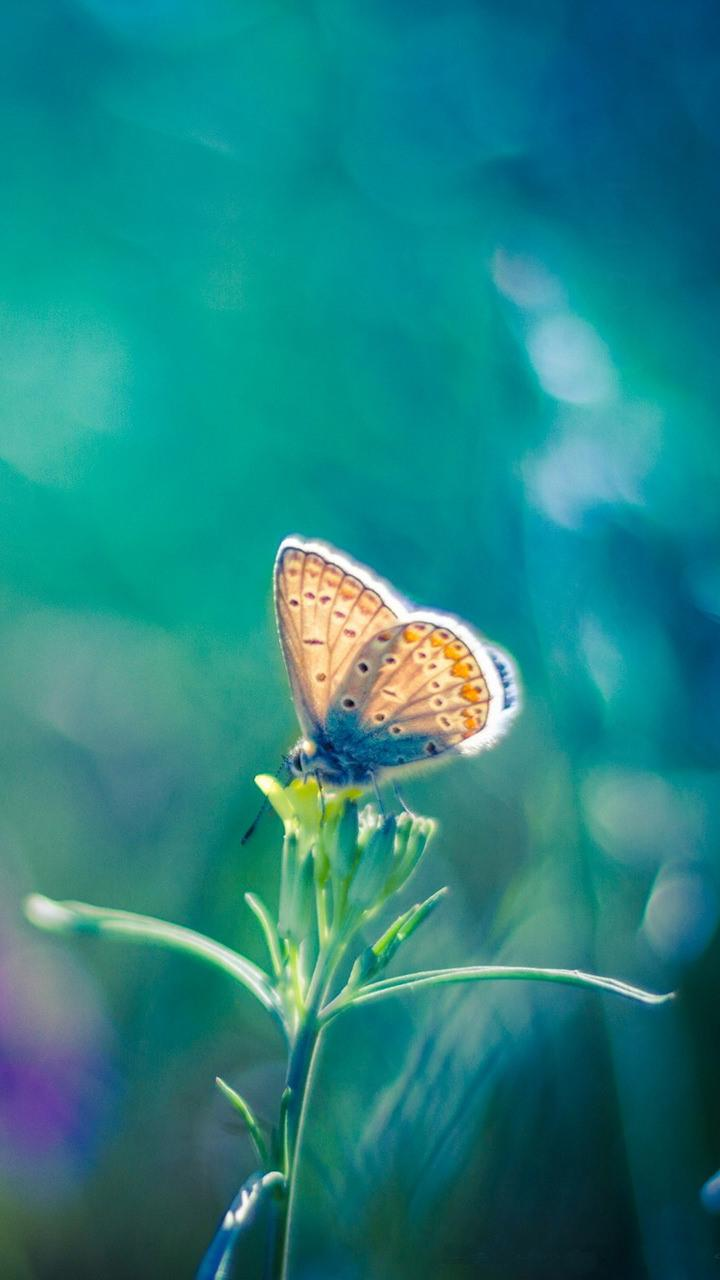 Wallpapers Awesome Cars Colourfull Butterfly Mobile Wallpapers Wallpaper Cave