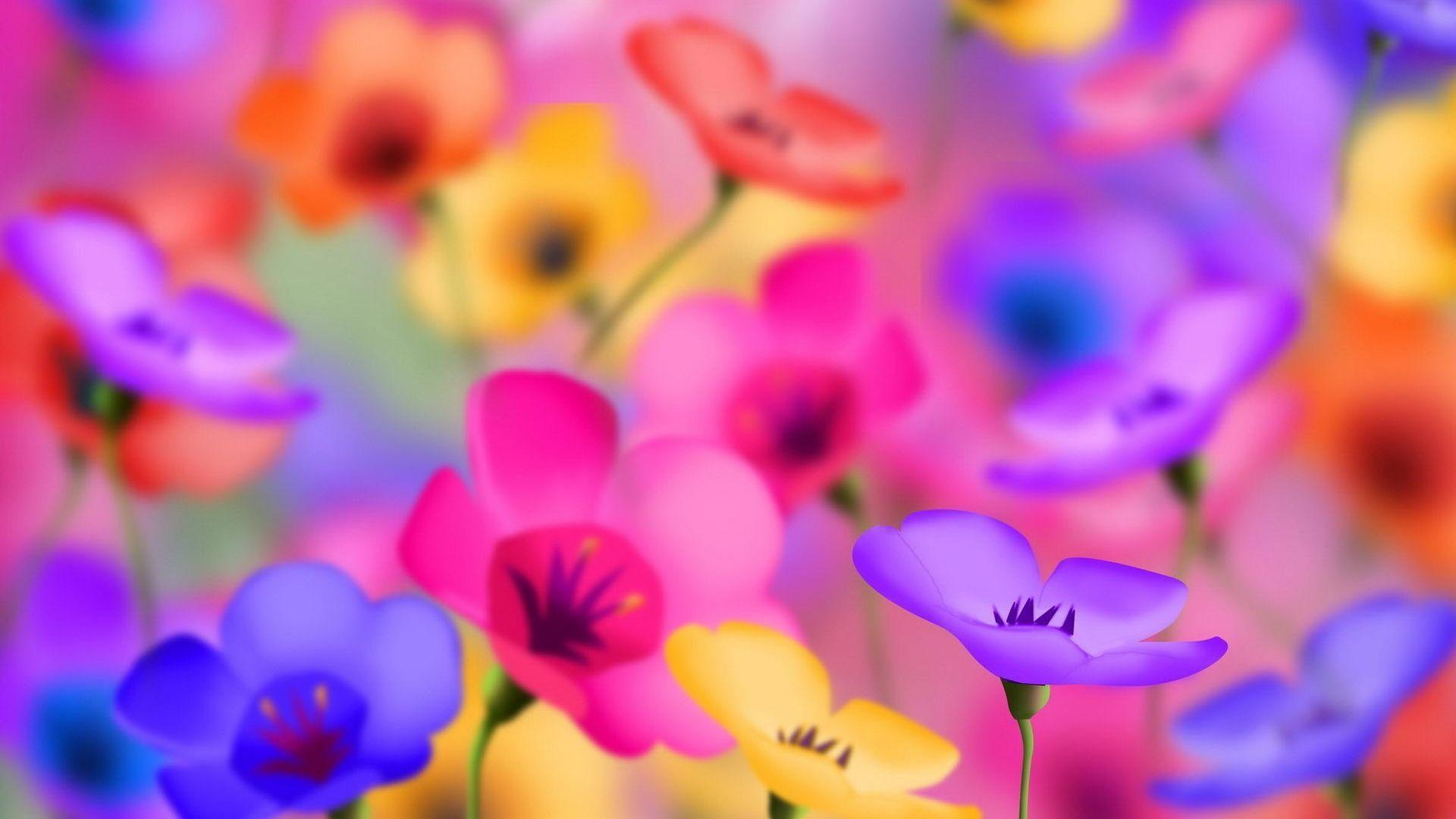 Beautiful Colorful Flowers Wallpapers