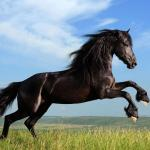 Black Horse Jumping Wallpapers Wallpaper Cave
