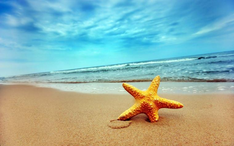 Starfish Wallpapers - 4USkY.com