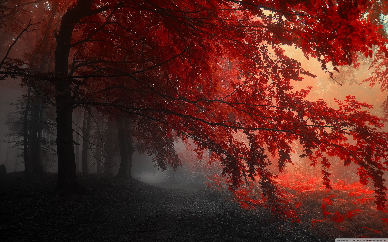 Beautiful nature image green forest 4k hd desktop. Aesthetic Autumn Wallpapers - Wallpaper Cave