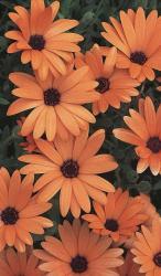 Orange Aesthetic Wallpapers Wallpaper Cave