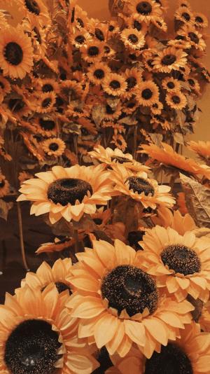orange wallpapers backgrounds iphone aesthetic sunflower yellow phone flower sunflowers wallpaperaccess hintergrund hintergrundbilder sonnenblumen aesthetics rose neon amazing
