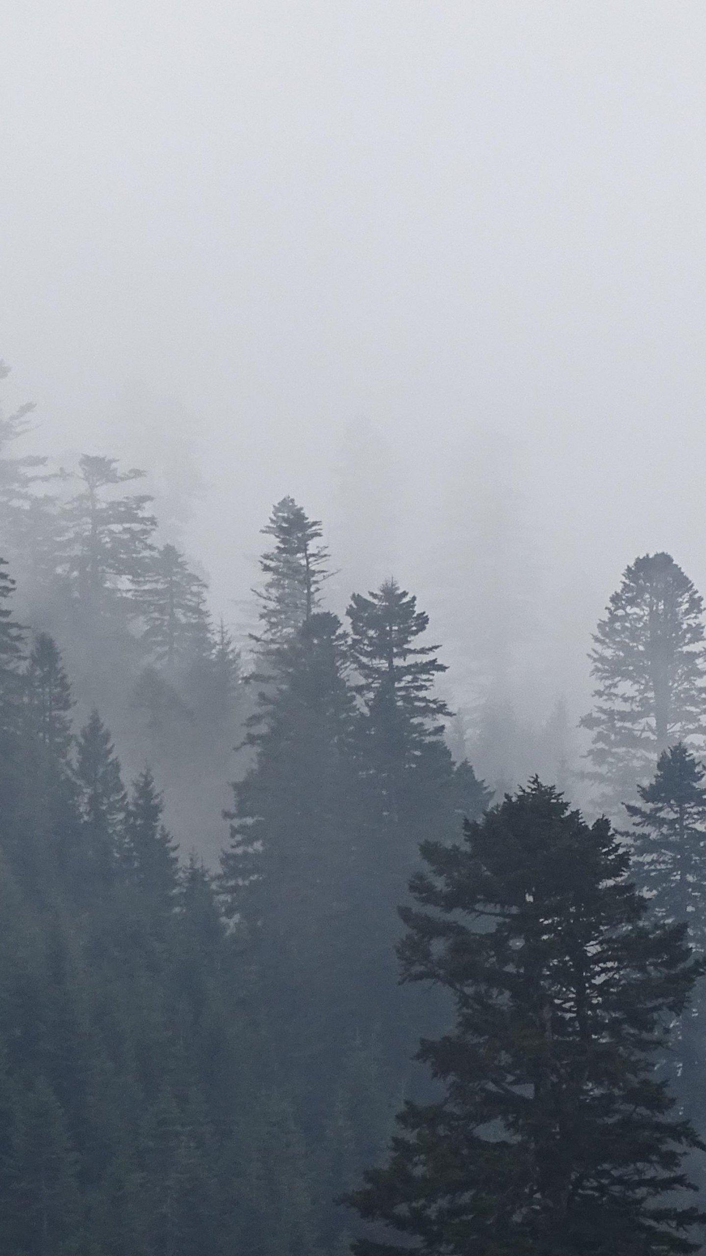 Aesthetic Foggy Forest Wallpaper : aesthetic, foggy, forest, wallpaper, Aesthetic, Foggy, Forest, Wallpapers, Wallpaper