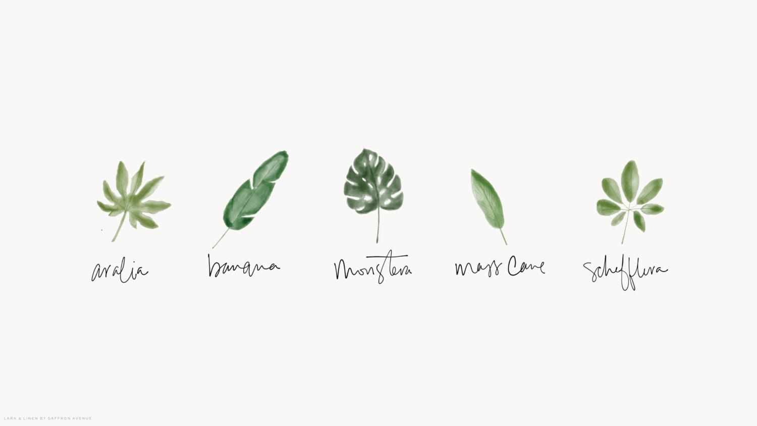 Cute Plant Computer Wallpapers