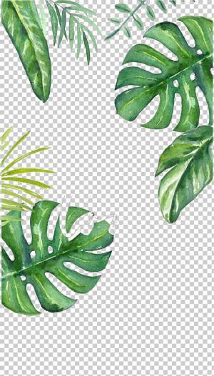 Leaf Wallpaper Asthetic Leaf Wallpaper