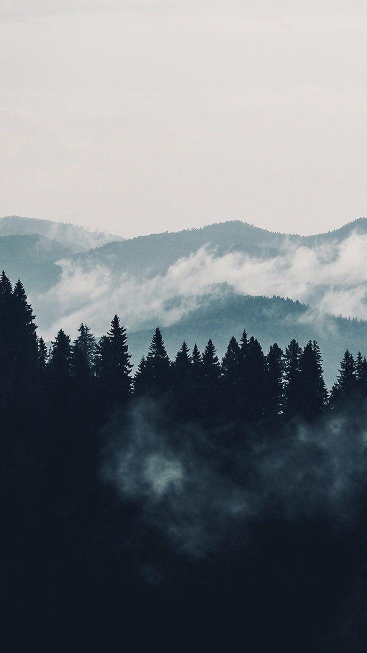 Aesthetic Foggy Forest Wallpaper : aesthetic, foggy, forest, wallpaper, Aesthetic, Forest, Wallpapers, Wallpaper