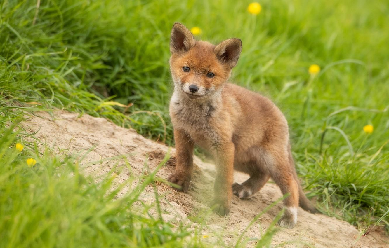 Baby Spring Animals Wallpapers