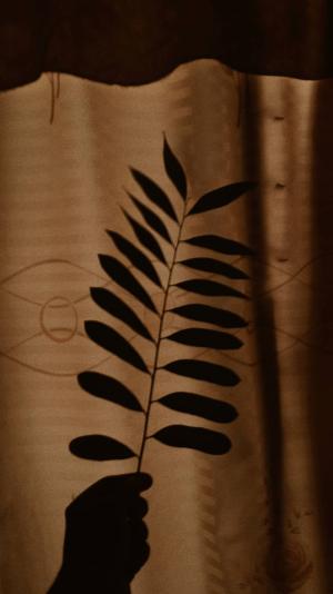 aesthetic brown wallpapers iphone brandonwoelfel shadow flowers wallpapercave