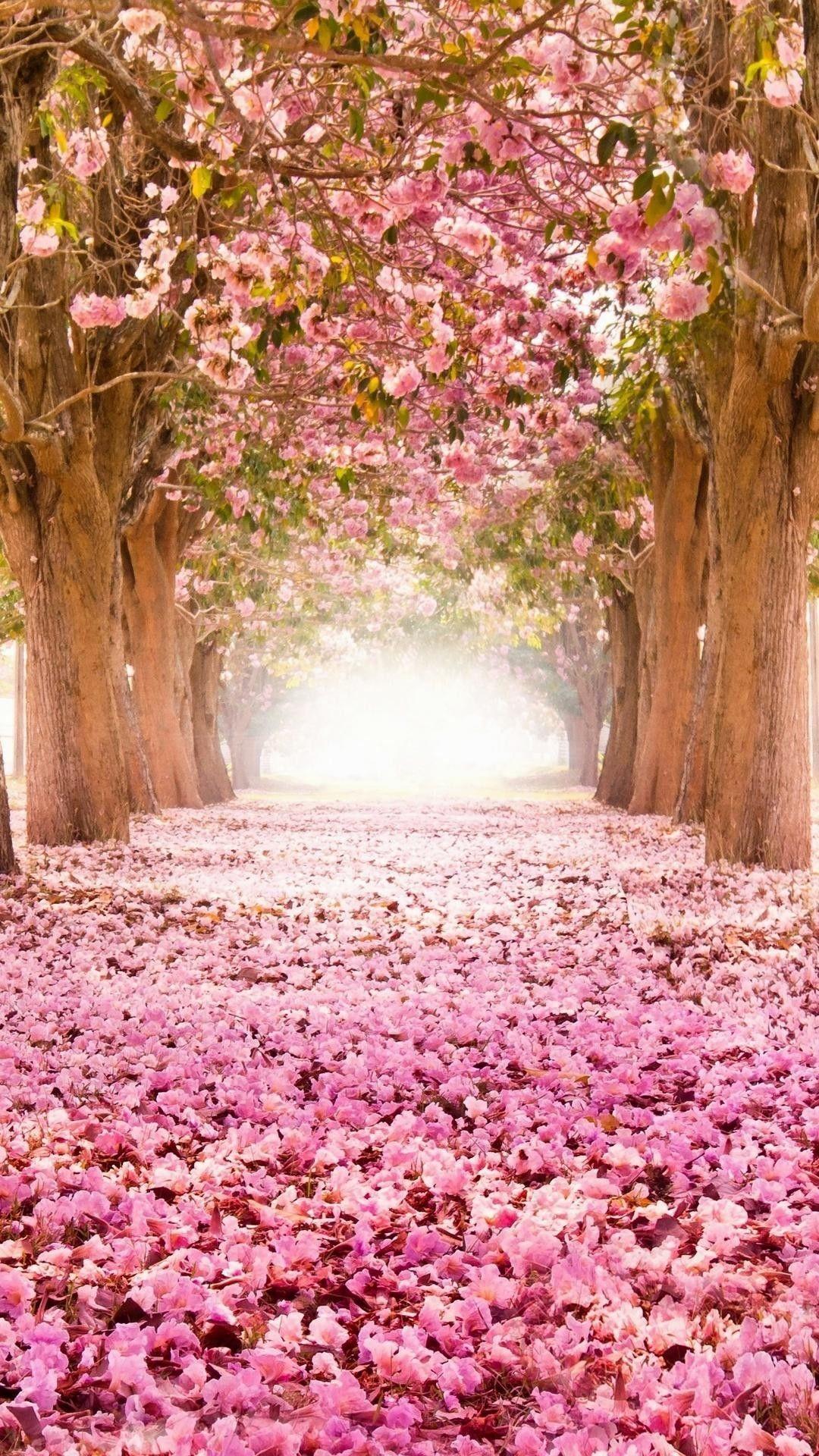 Mobile Iphone Flower Nature Wallpaper Wallpaper Hd