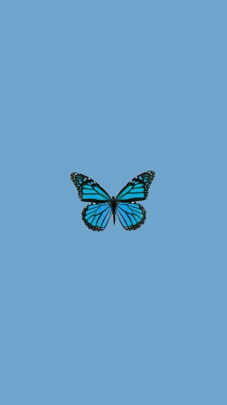Blue Butterfly Tumblr : butterfly, tumblr, Aesthetic, Butterfly, Wallpapers, Wallpaper