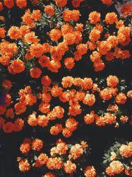 Cute Aesthetic Orange Wallpapers Wallpaper Cave