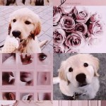 Dog Aesthetic Wallpapers Wallpaper Cave