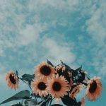 Clouds Sunflower Aesthetic Wallpapers Wallpaper Cave