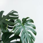 Plant Aesthetic Hd Wallpapers Wallpaper Cave