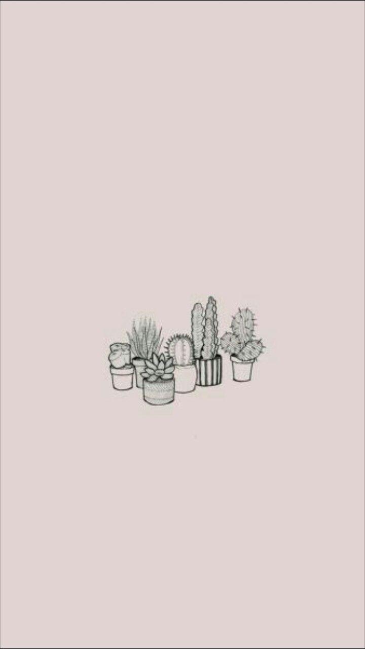 Aesthetic Cactus Wallpaper : aesthetic, cactus, wallpaper, Aesthetic, Cactus, Wallpapers, Wallpaper