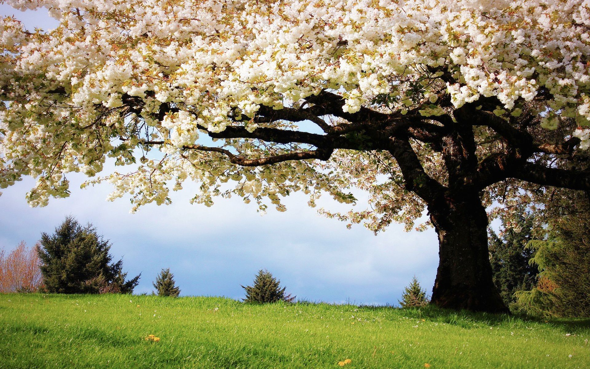 picture Spring Scenery Wallpaper scenic spring wallpapers wallpaper cave