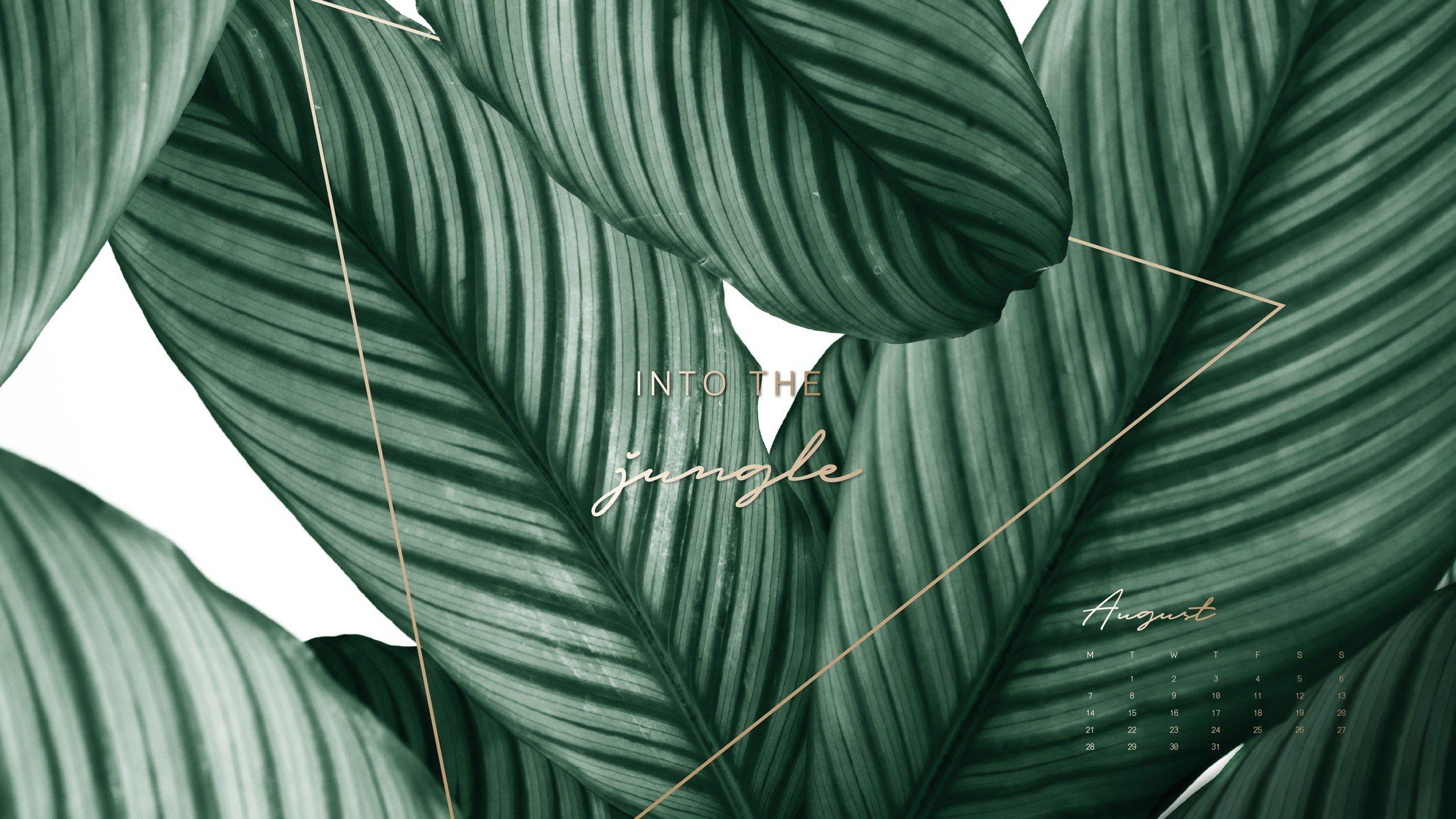 Aesthetic Wallpaper Pc Plant ...